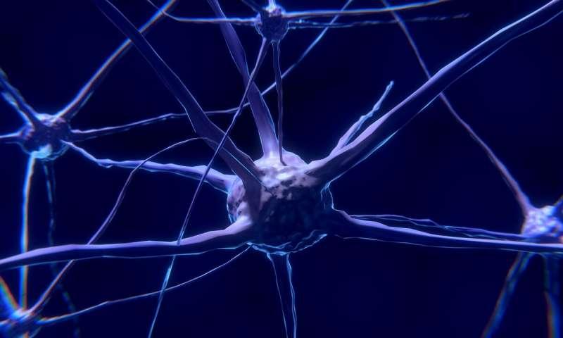 Stabilizing neuronal branching for healthy brain circuitry