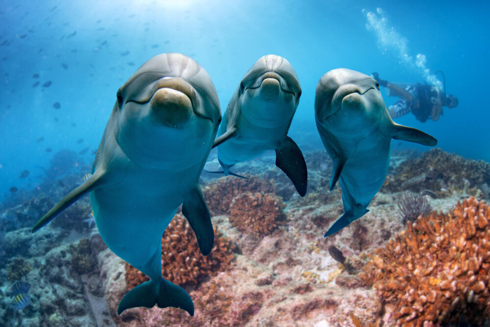 Antibiotic resistance surges in dolphins, mirroring humans, Here's everything you want to know