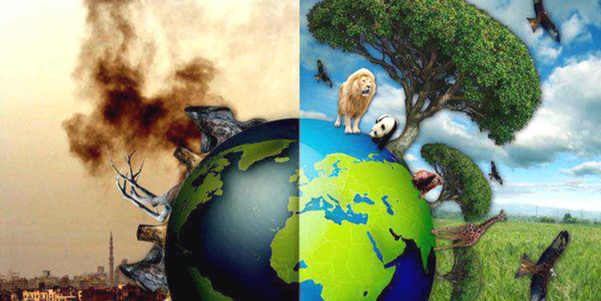 Ecocide Should Be Identified As a Crime Against Humanity- why?