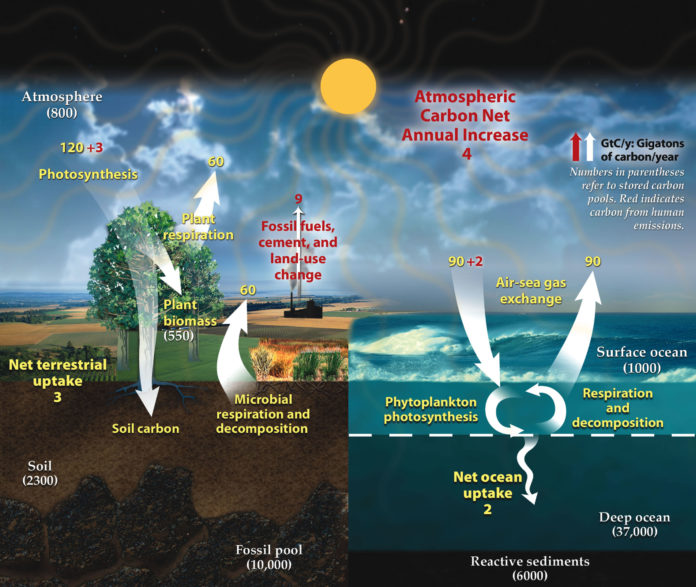 Where did Earth's store its carbon?