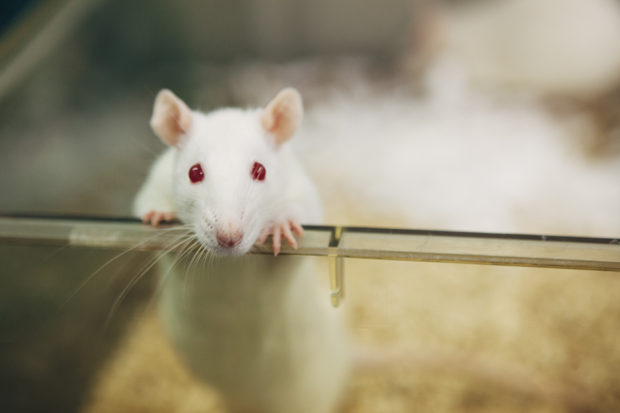 USING STEM CELLS ONLY SCIENTISTS GREW LIVING MOUSE EMBRYOS :DETAILS INSIDE