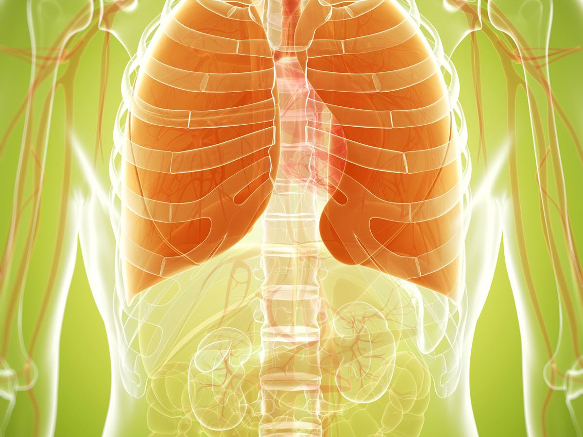 Fat store in the lungs can cause an increased risk of asthma: Finds Study