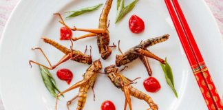 Snacks like Ants, crickets and cockroaches are healthy for body- Finds Study