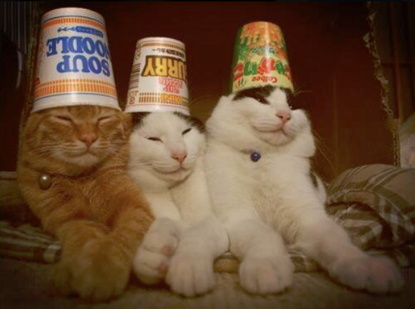 drunk cats