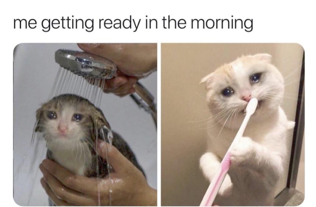 plan cat