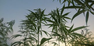weed rural town