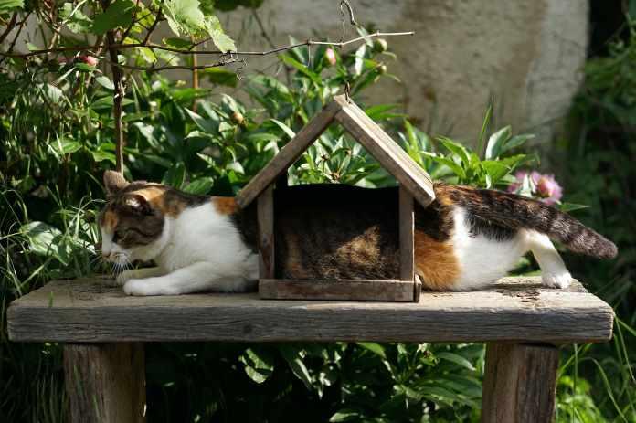 5 Benefits of Pet Insurance