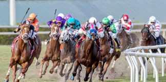 Horse Racing Understanding Odds