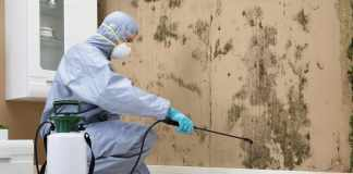 Hiring Professional Mold Remediation Services