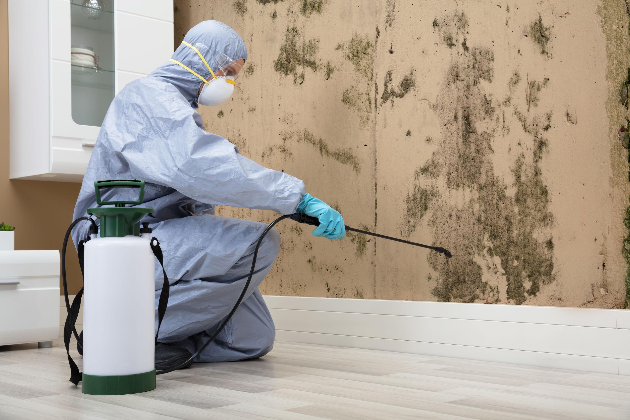 Mold Remediation Services - Service Master Restore