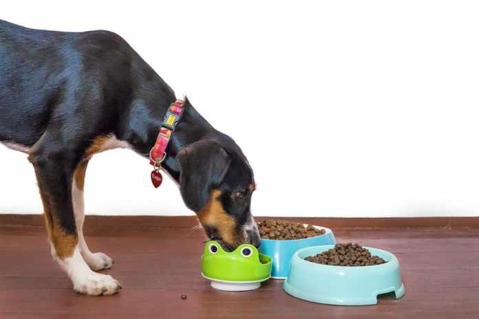 Healthy Ingredients in Dog Food