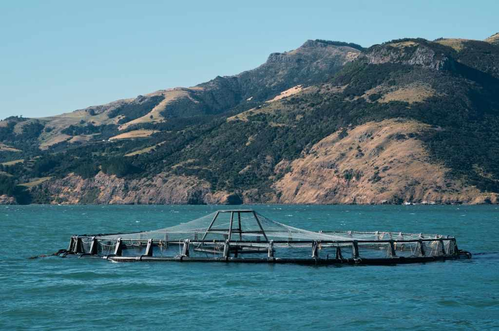 Conclusion of Your Fish Farm