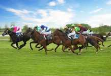 learned from St Leger Stakes
